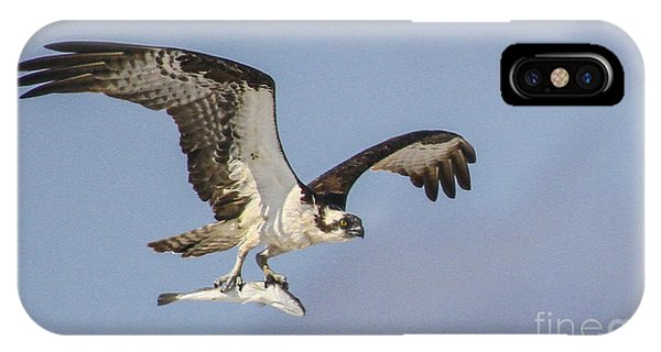 Osprey With Dinner IPhone Case
