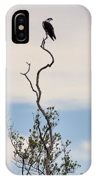Osprey's Stance IPhone Case