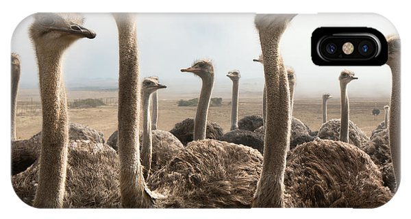 Ostrich iPhone Case - Ostrich Heads by Johan Swanepoel