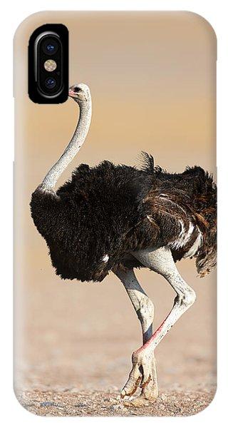 Ostrich iPhone Case - Ostrich by Johan Swanepoel