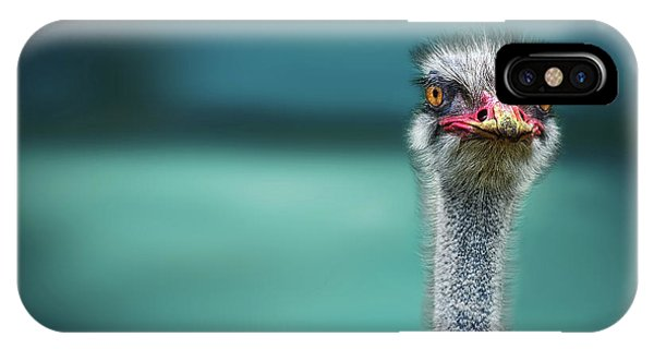 Ostrich iPhone Case - Ostrich Protecting Two Poor Chicken From The Wind by Piet Flour