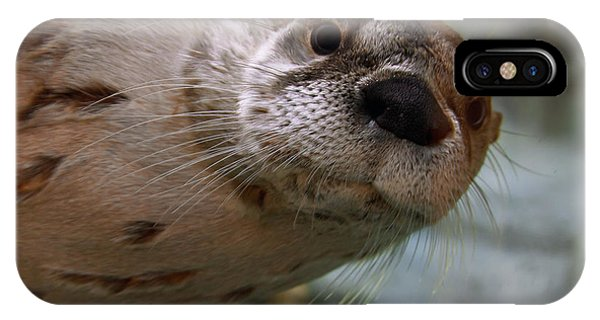 Otter Be Lookin' At You Kid IPhone Case