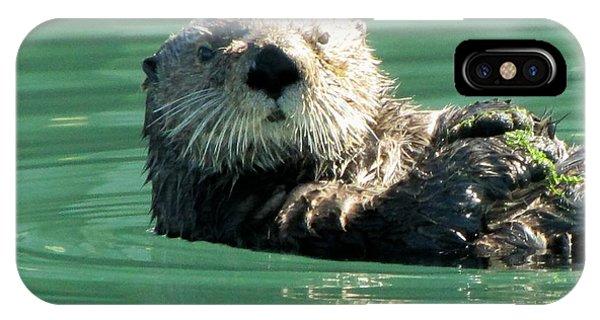 otter in Cordova Harbor IPhone Case
