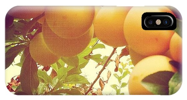 Color iPhone Case - Our Plum Tree Is Loaded This Year...any by Blenda Studio