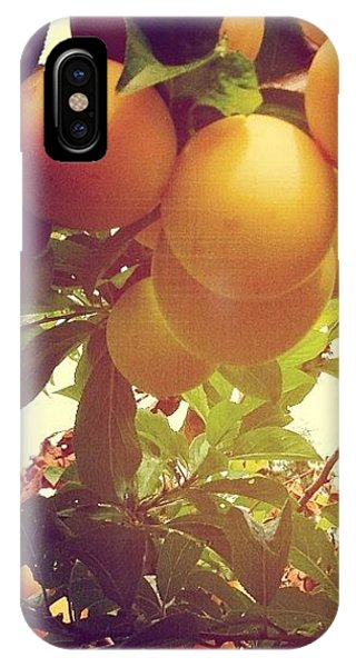 Orange iPhone Case - Our Plum Tree Is Loaded This Year...any by Blenda Studio