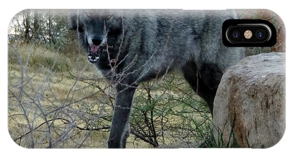 Out Of Africa Black Wolf IPhone Case