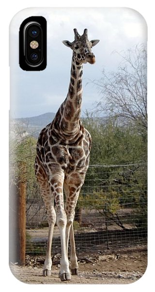 Out Of Africa  Giraffe 1 IPhone Case