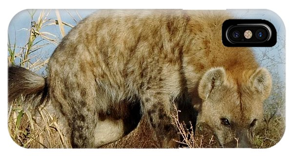 Out Of Africa Hyena 1 IPhone Case