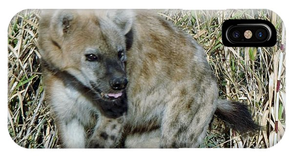 Out Of Africa  Hyena 2 IPhone Case