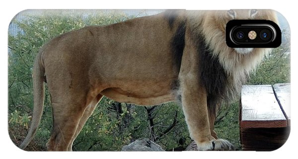 Out Of Africa  Lion 1 IPhone Case