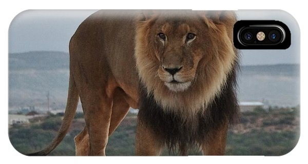 Out Of Africa Lion 3 IPhone Case