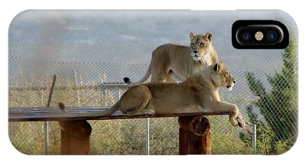Out Of Africa Lions IPhone Case