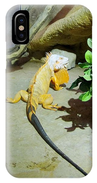 Out Of Africa Orange Lizard 2  IPhone Case