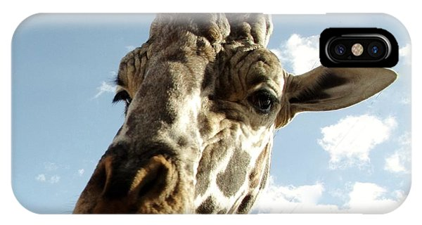 Out Of Africa  Reticulated Giraffe IPhone Case