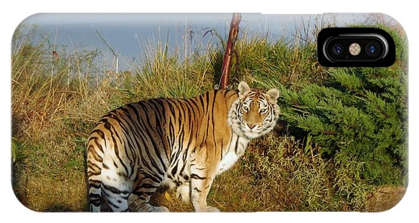 Out Of Africa  Tiger 1 IPhone Case