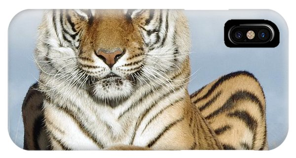 Out Of Africa Tiger 3 IPhone Case
