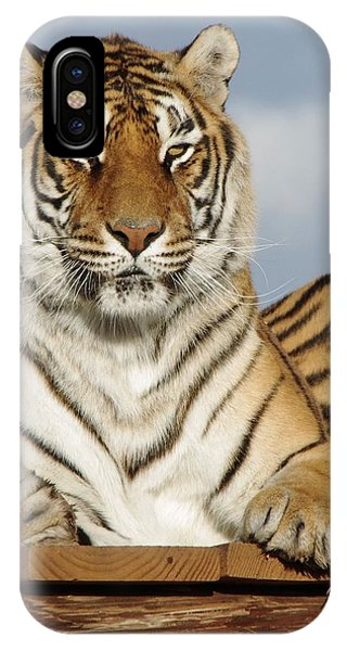 Out Of Africa Tiger 4 IPhone Case