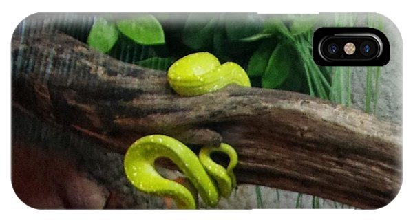Out Of Africa Tree Snake IPhone Case