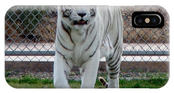 Out Of Africa White Tiger IPhone Case