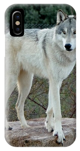 Out Of Africa Wolf  IPhone Case