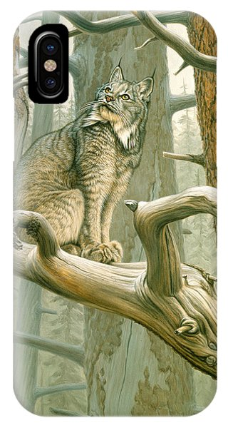 Lynx iPhone Case - Out Of Reach - Lynx by Paul Krapf