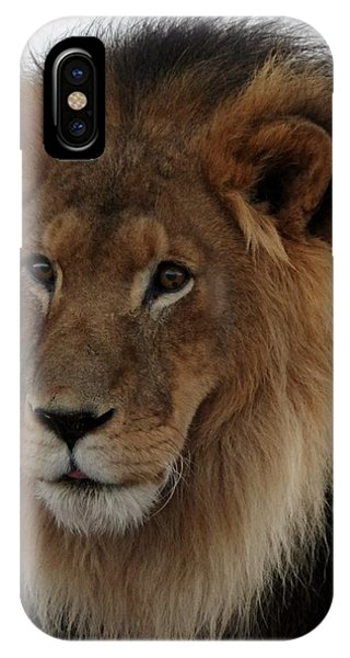 Out Ofafrica  Lion 4 IPhone Case