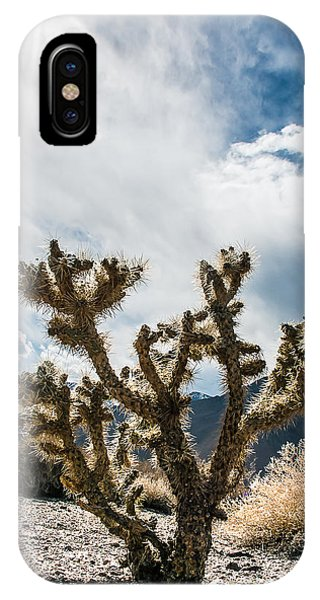 Owens Valley Cholla IPhone Case