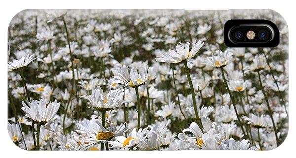 Ox Eye Daisies IPhone Case