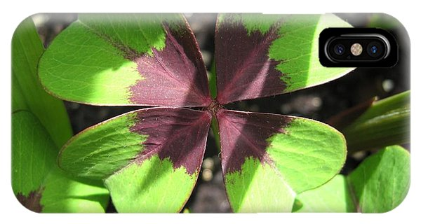 iPhone Case - Oxalis Deppei Named Iron Cross by J McCombie