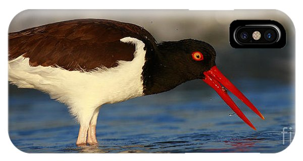 Oystercatcher In Surf IPhone Case