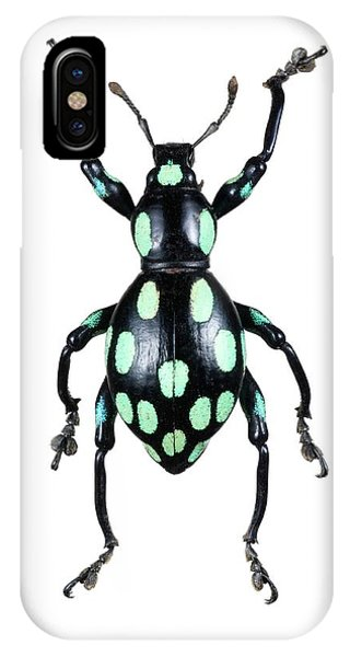 Coleoptera iPhone Case - Pachyrhynchus Weevil by Lawrence Lawry