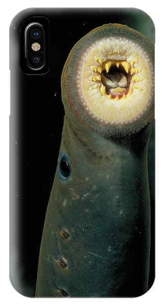 Pacific Lamprey Phone Case by Rondi Church