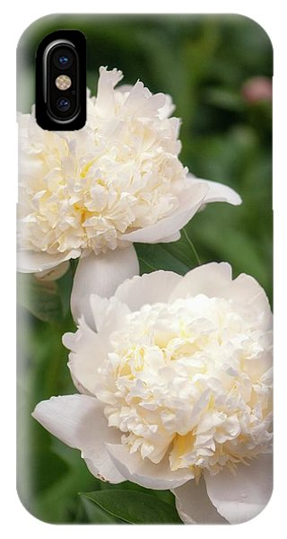 Icing iPhone Case - Paeonia Lactiflora 'bridal Icing' by Maria Mosolova/science Photo Library