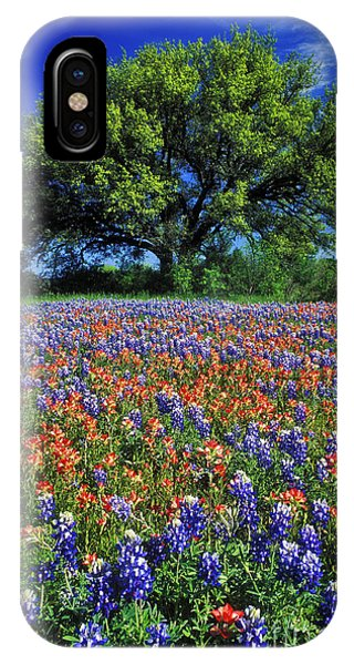 Rural America iPhone Case - Paintbrush And Bluebonnets - Fs000057 by Daniel Dempster