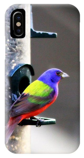 Painted Bunting - Img 9757-002 IPhone Case