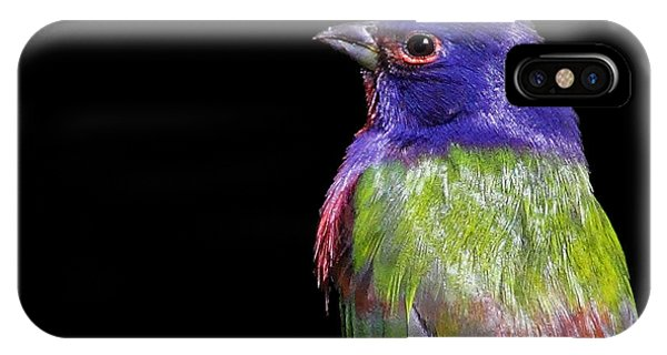 Painted Bunting IPhone Case