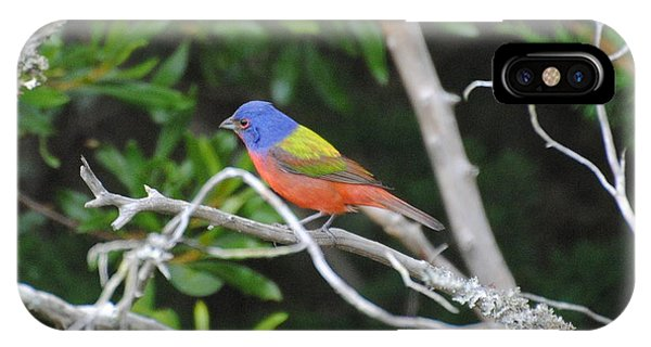 Painted Bunting Out On A Limb IPhone Case