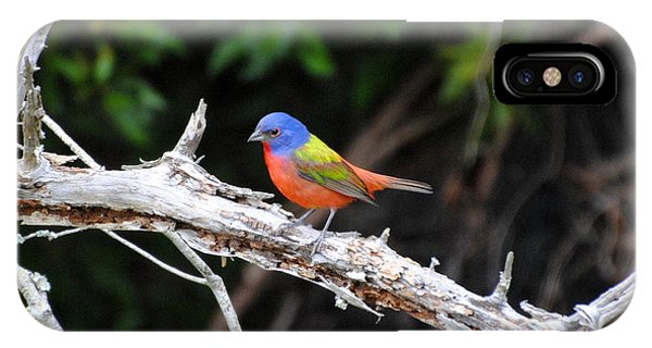 Painted Bunting Perched On Limb IPhone Case