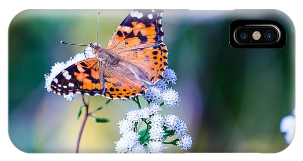 Painted Lady Butterfly 1 IPhone Case