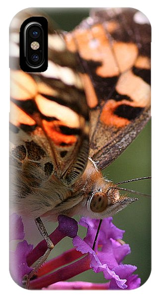 Painted Lady On Butterfly Bush IPhone Case