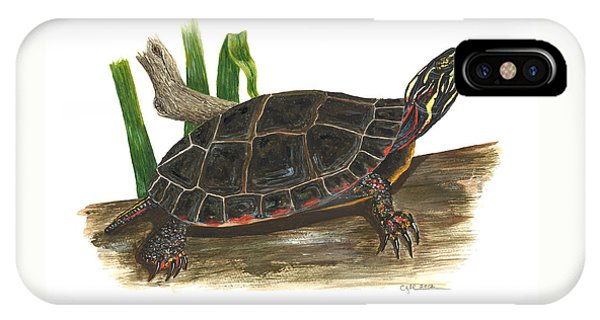Painted Turtle IPhone Case