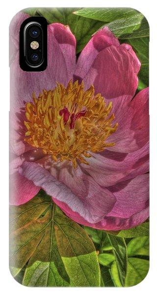 Painterly Peony IPhone Case