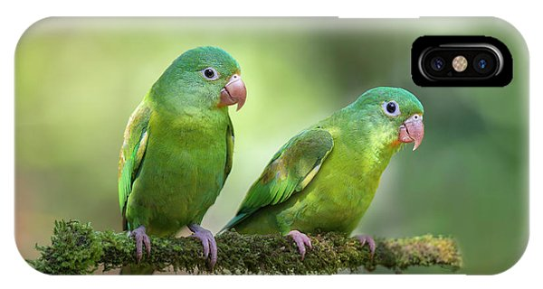 Green iPhone Case - Pair O' Parakeets by Greg Barsh