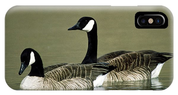 Canada Goose iPhone Case - Pair Of Canada Geese (branta Canadensis) by William Ervin/science Photo Library
