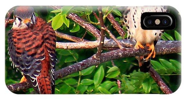 Caribbean Falcons IPhone Case