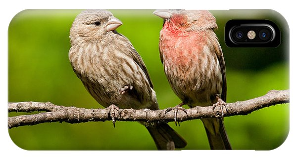 Pair Of House Finches In A Tree IPhone Case