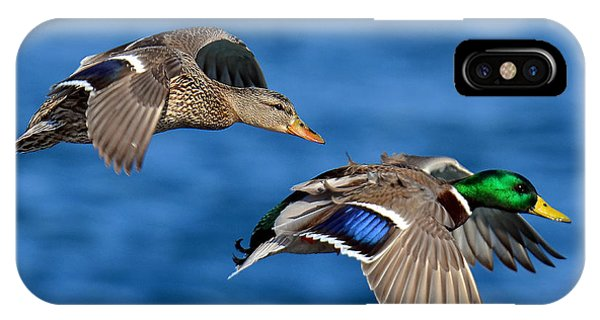 Pair Of Mallards In Flight IPhone Case
