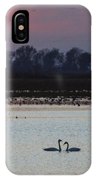Pair Of Swan At Sunset IPhone Case