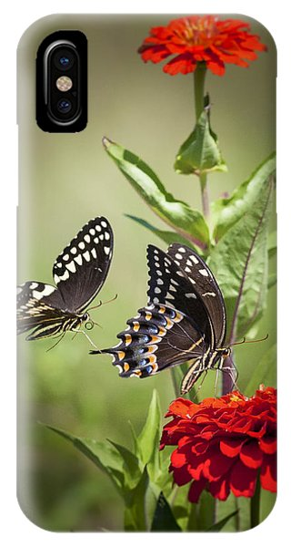 Palamedes Swallowtail Butterflies IPhone Case