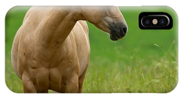 Pale Brown Horse IPhone Case